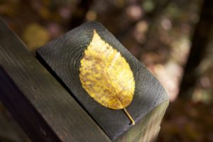 and BCD? - Leaf on Post